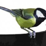 Proč krmit ptáčky?